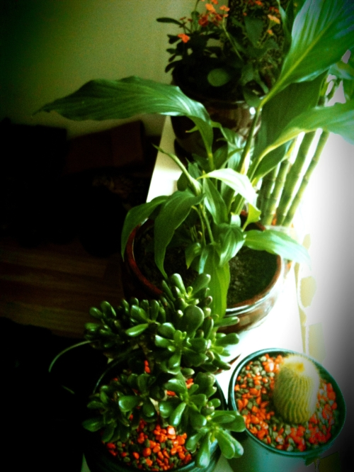 potted apartment plants