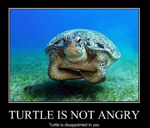 Motivator - Turtle is not Angry-1